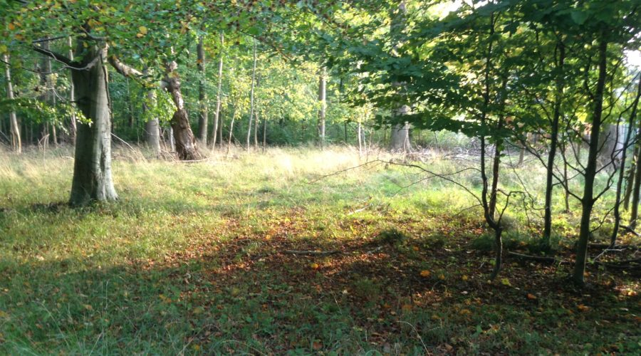 The Deer Park: Second Trip